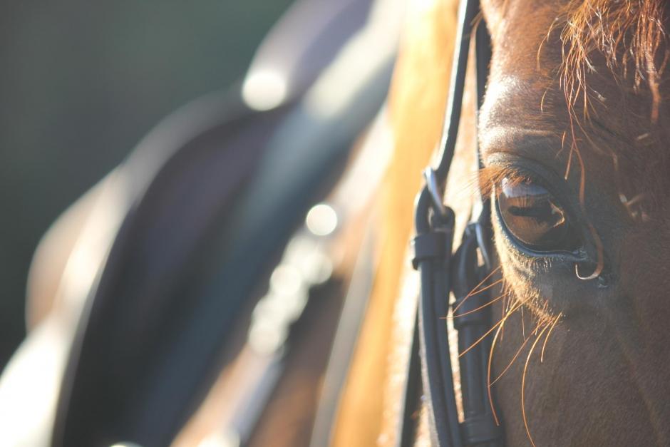 Stresstest visar hur hästar påverkas vid tävling