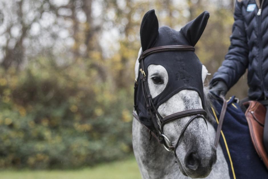 Huva som ska lugna hästen väcker frågetecken
