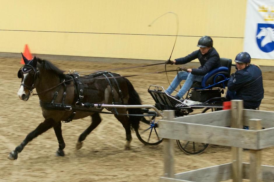 Laddade ponnyer i spännande duellkörning
