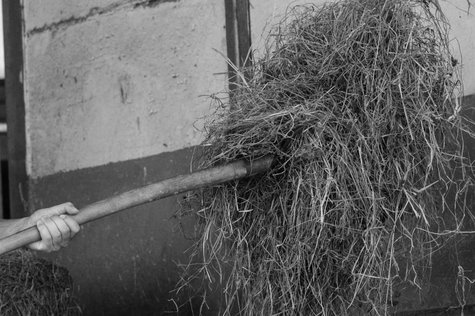 Runt 200 höbalar stulna från hästgård