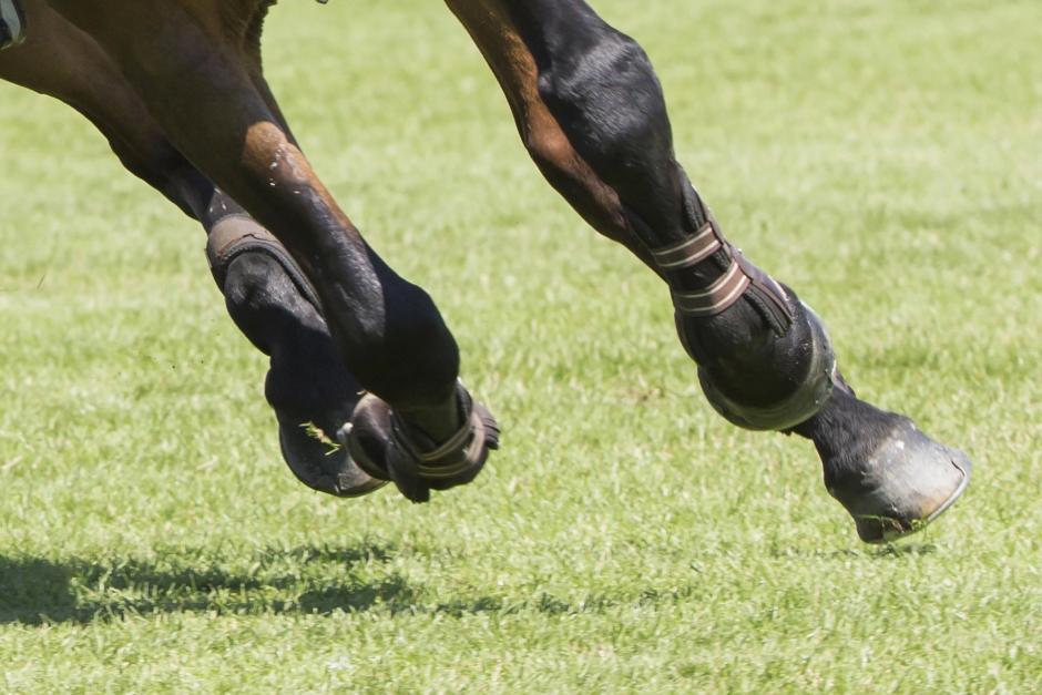 Veterinärer om när tävlandet går före hästen