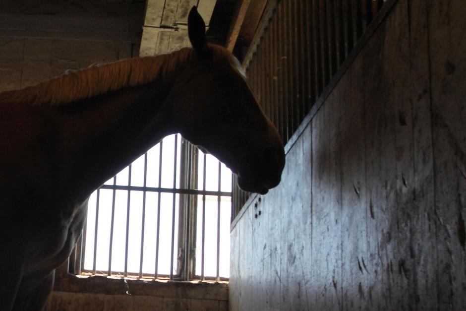 Hästar döda i EHV-utbrott i Danmark