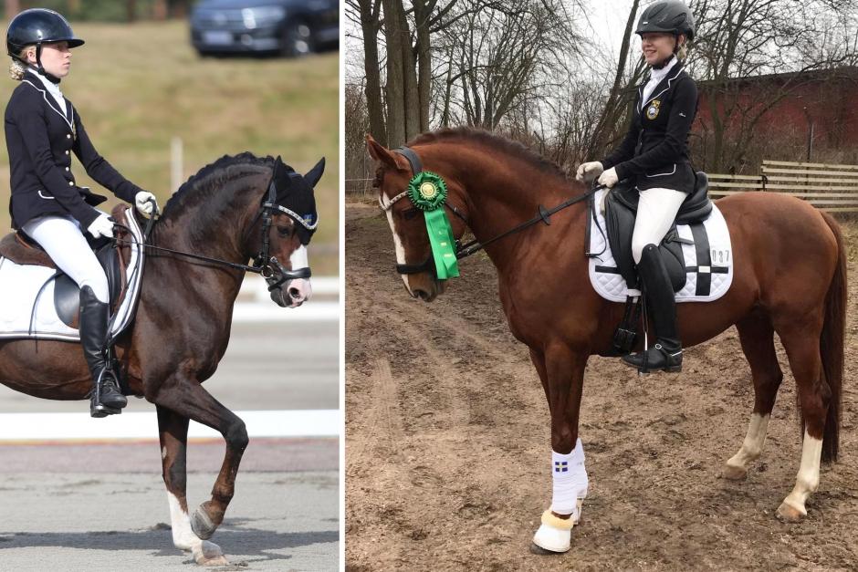Hannah satsar vidare på större ponnyer – ny hingst i stallet