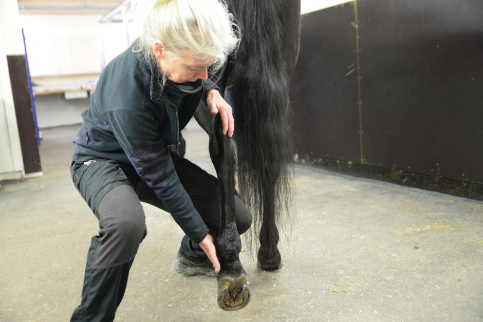 """""""Många vill sina hästar så väl, men vet inte vad stretchingen kan leda till"""""""