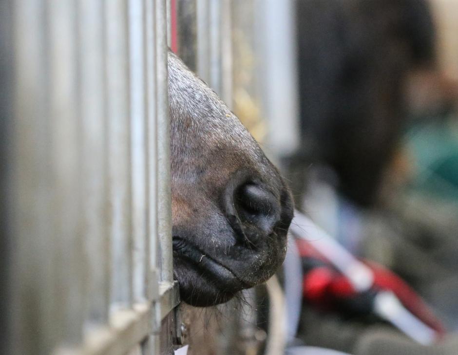 """Ingen rätt till hage för hästar i Sverige: """"Hårresande och ryggradslöst"""""""