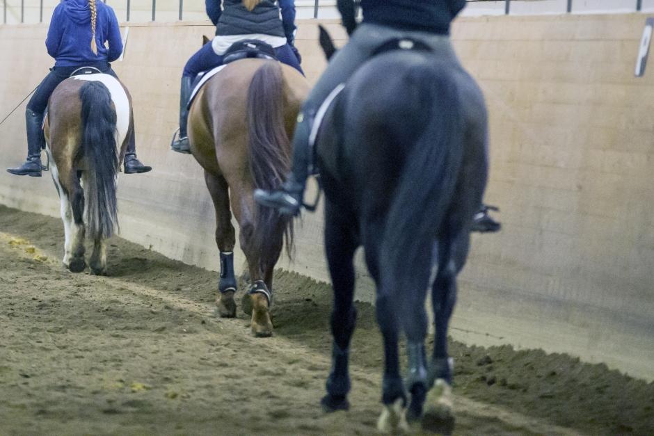 """Stänger för besökande hästar: """"Hellre förlorar vi pengar än hästar"""""""