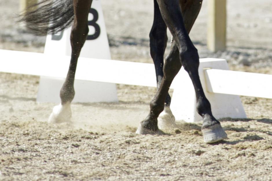 Här är helgens ponnyvinnare i dressyr