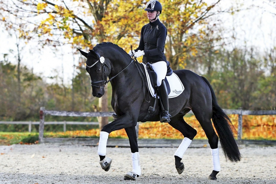 Emma Ahlberg: Så får jag mina hästar lätta och luftiga