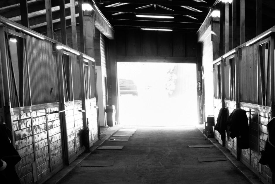 Därför frias man som lät hästar i sitt stall svälta ihjäl