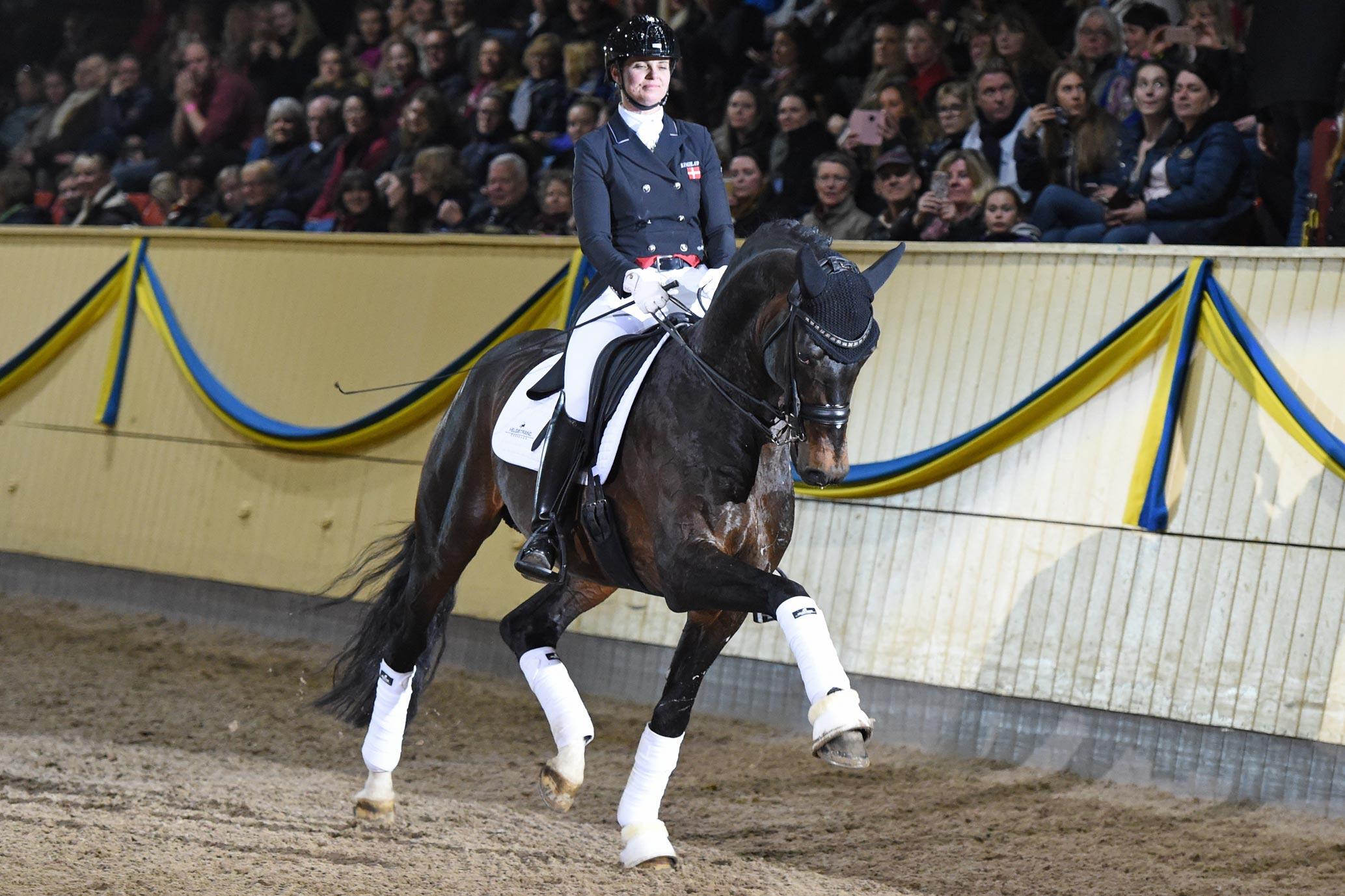 Bettina Jäger med Franklin 9118 (KWPN hingst f-10 e Ampere u Wakle M e Ferro-Flemmingh)