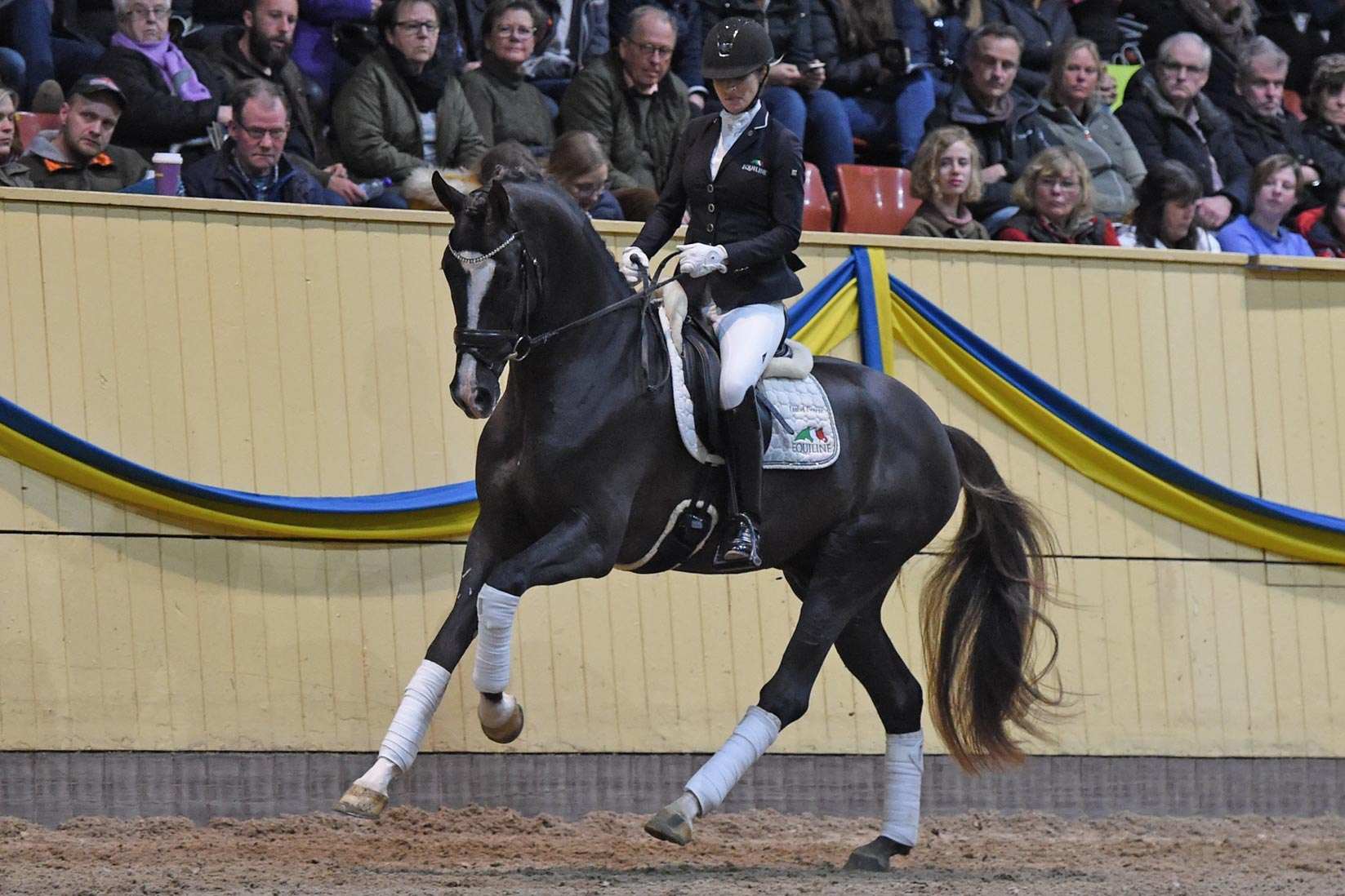 Isabel Freese med Sezuan's Donnerhall (OLD hingst f-15 e Sezuan u Siola e Sir Donnerhall I-Blue Hors Don Schufro)