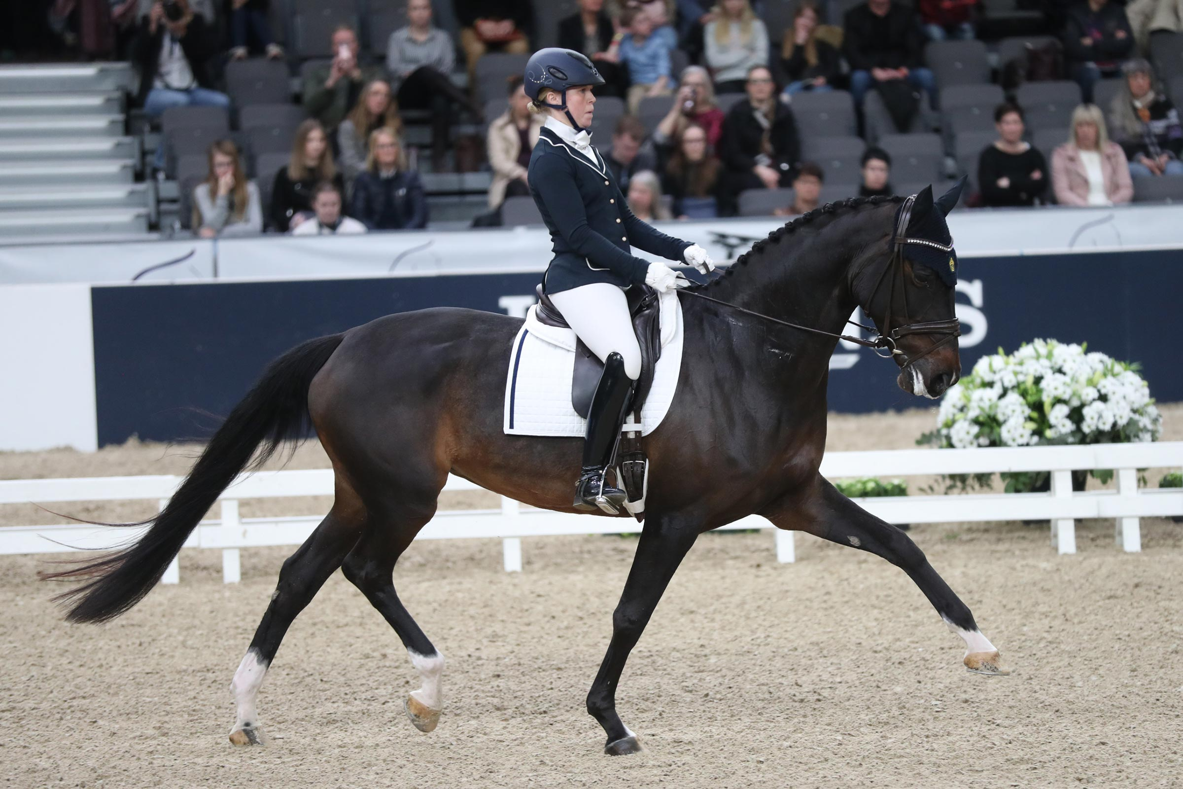 Yvonne Österholm - Hera (1) (SWB sto f-11 e Hohenstaufen II u Spira e Don Schufro, uppf Råbäcks Egendom AB) 83,2%