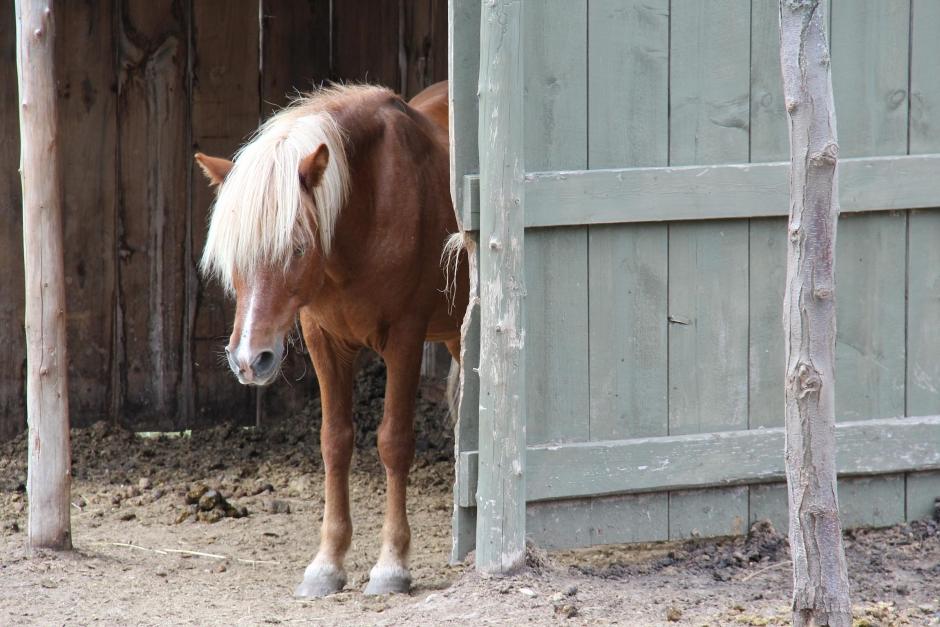 Lämnade hästarna utan mat och vatten – åtalas för djurplågeri