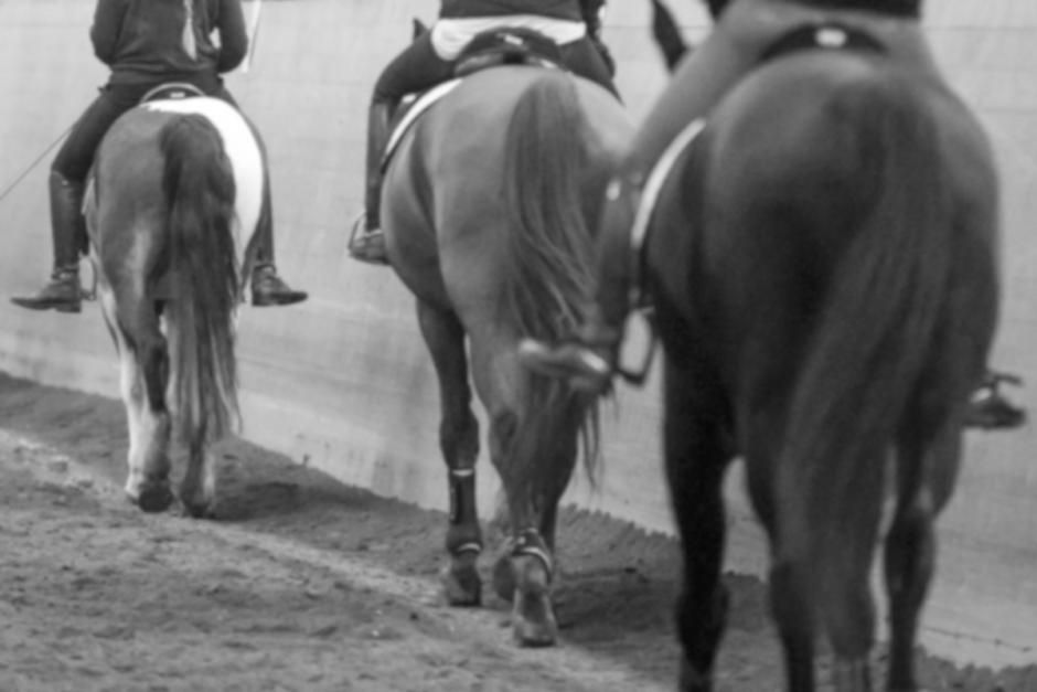 Handlare sålde samma häst till tre ridskolor