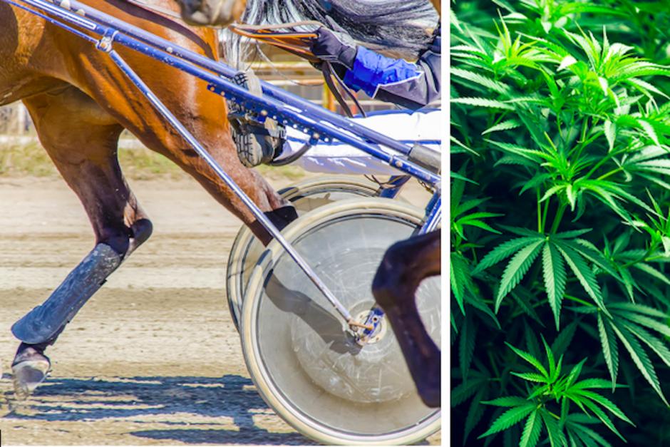 Misstankar om spår av cannabisämne i välkänt svenskt foder