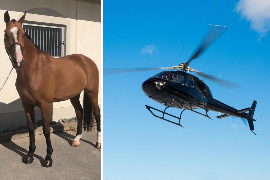 Häst försvunnen från tävlingsplats – nu återfunnen
