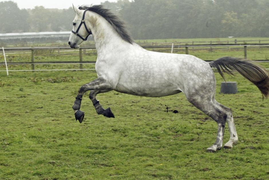 Kan hästens temperament beskrivas objektivt?