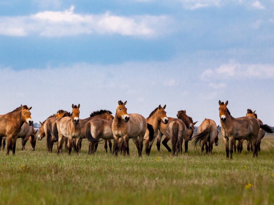 Hästens ursprung en gåta för forskarna
