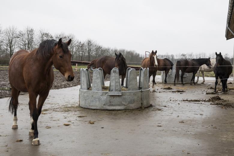 Avelsston Hos Hh Horses Solröd DanmarkFoto: Lotta Brundin Gyllensten