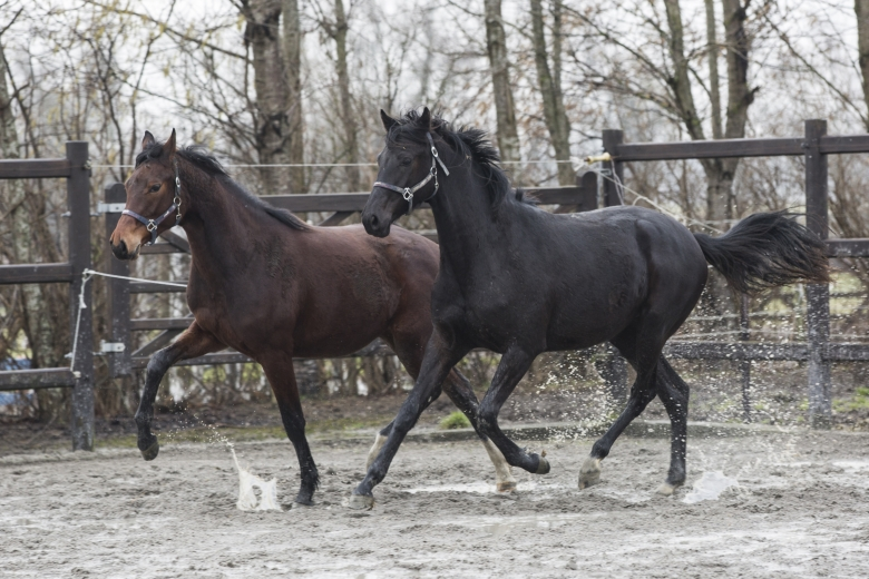 190514_hhhorses_2ston_lgwb