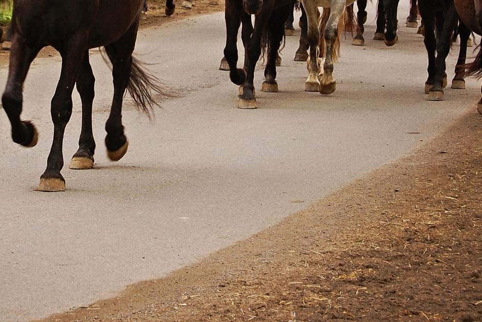 15 hästar på rymmen under tisdagen