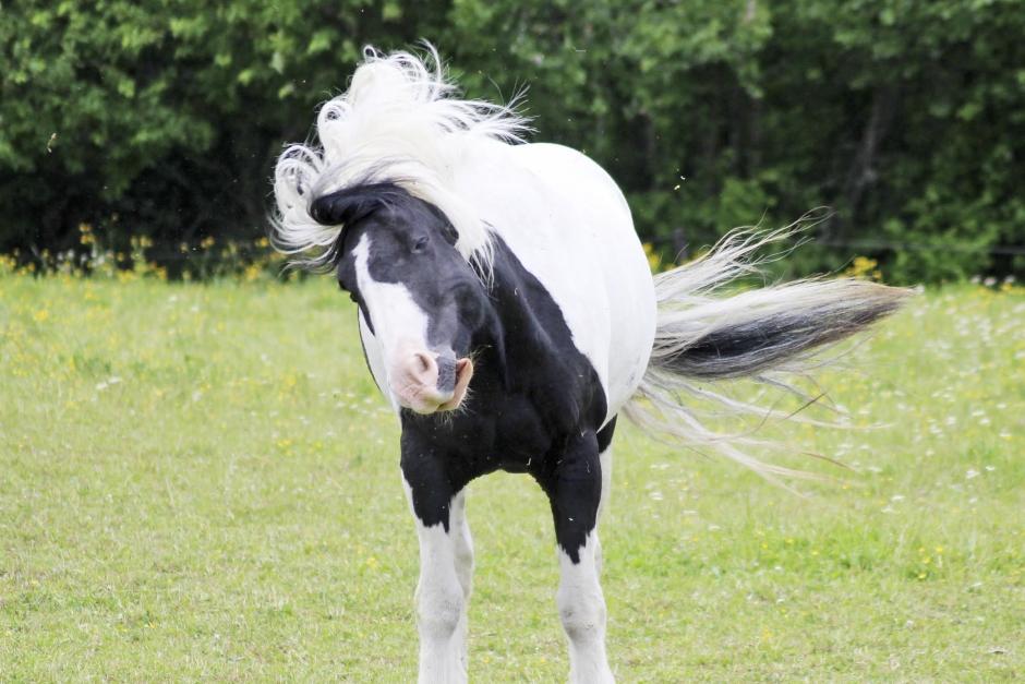 Ny forskning: Magnesium kan hjälpa hästar med headshaking