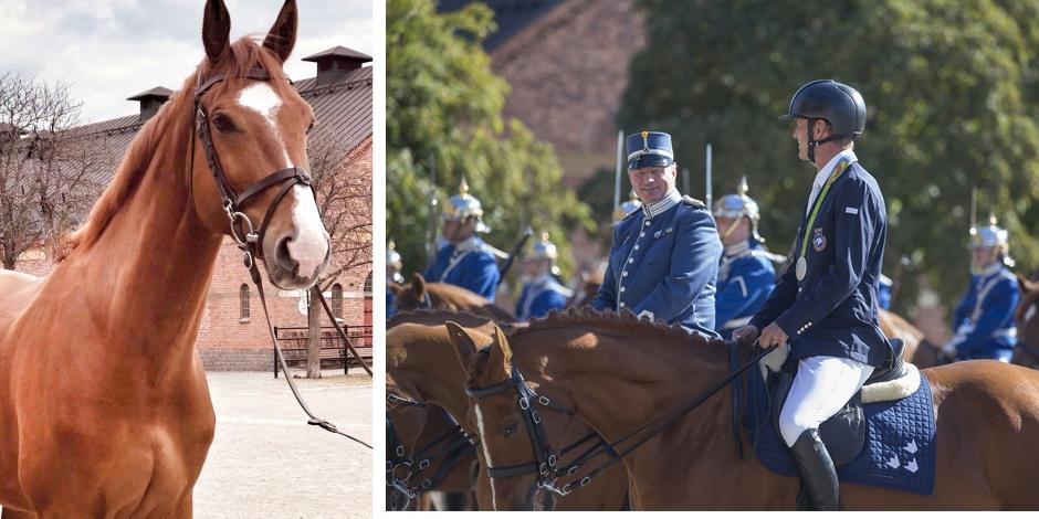 Klar vinnare när hela Sveriges häst fick sitt namn