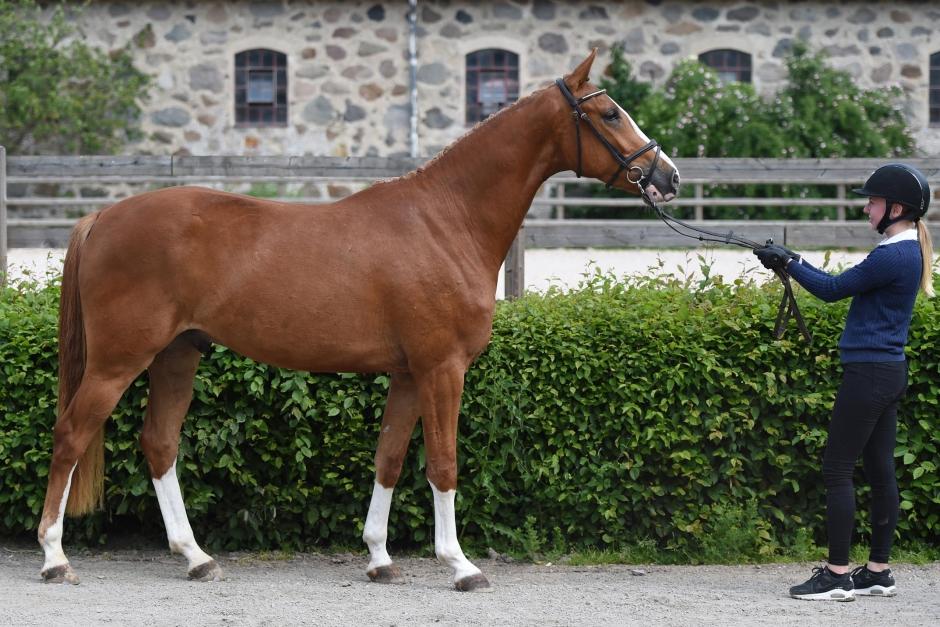 Antonia Anderssons hästar utmärkte sig på Flyinge