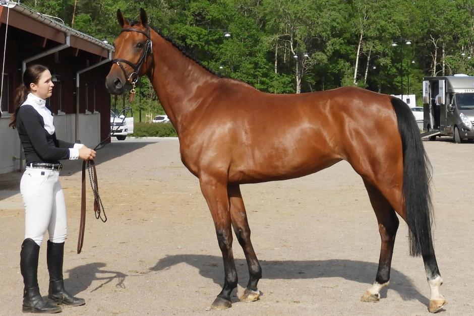 Hästarnas framgångar motiverar My Lagerberg