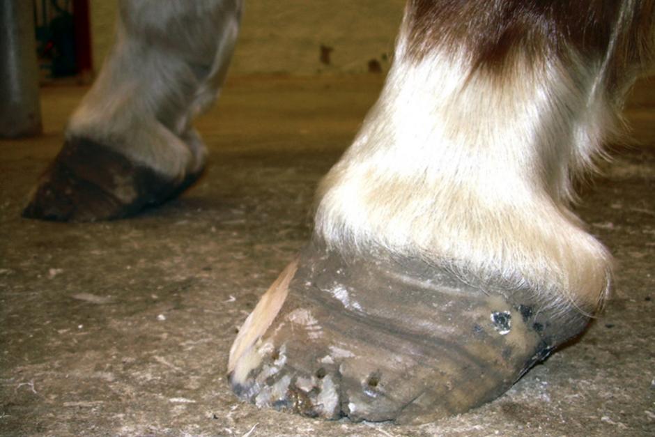 Tog inte hand om fånghäst – döms för djurplågeri