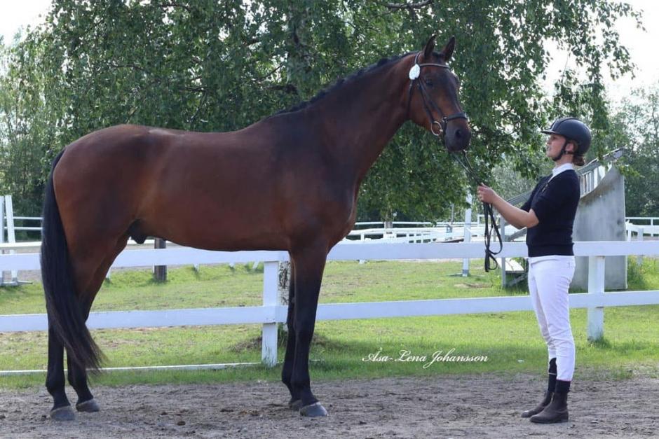 Ida Hellströms hästar toppade som dressyrtalanger