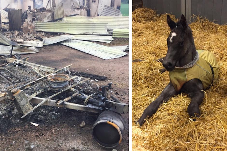 """Hon förlorade sina hästar i branden: """"Det är en sådan chock"""""""
