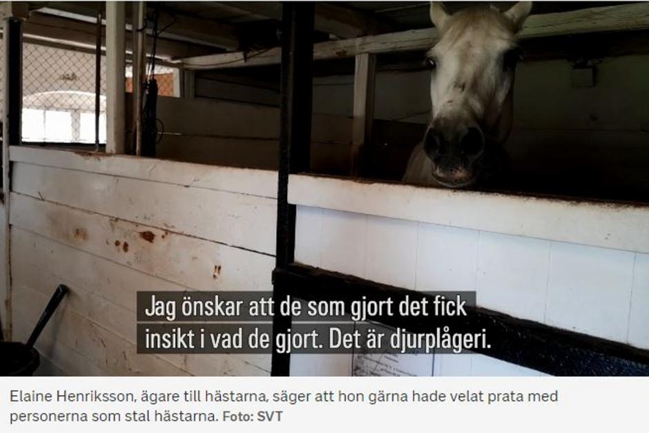 Ungdomar stal hästar – upptäcktes av väktare