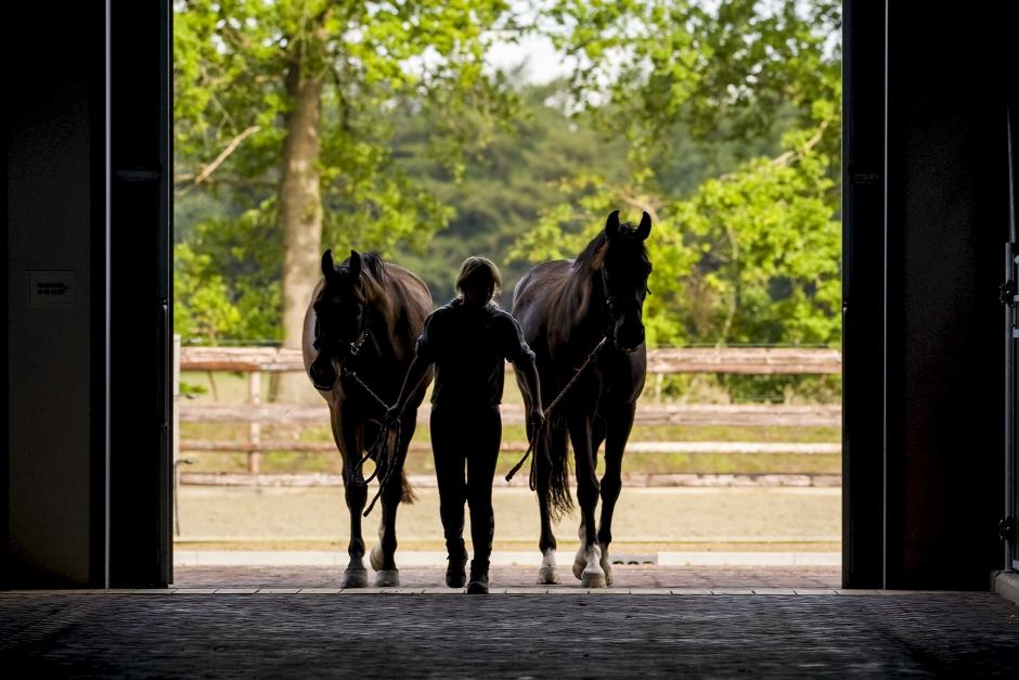 Tveksamma villkor: Hästskötare riskerar att få betala dyrt