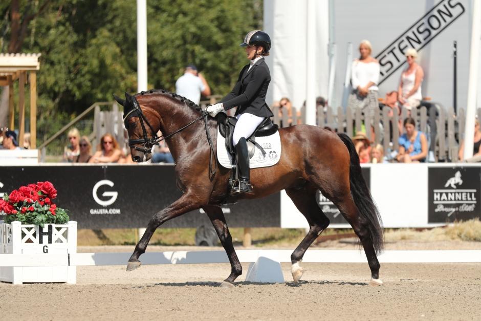 """""""Det står Grand Prix i pannan på den hästen"""""""