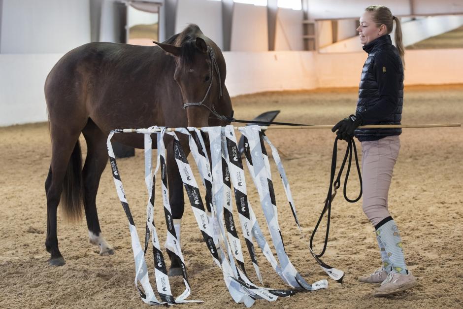 ERT: Så tränar du din häst att bli orädd