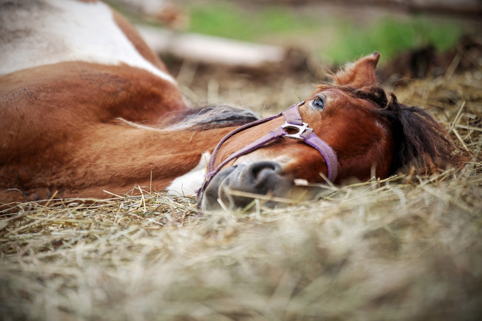 Döda hästar hittades i stallet
