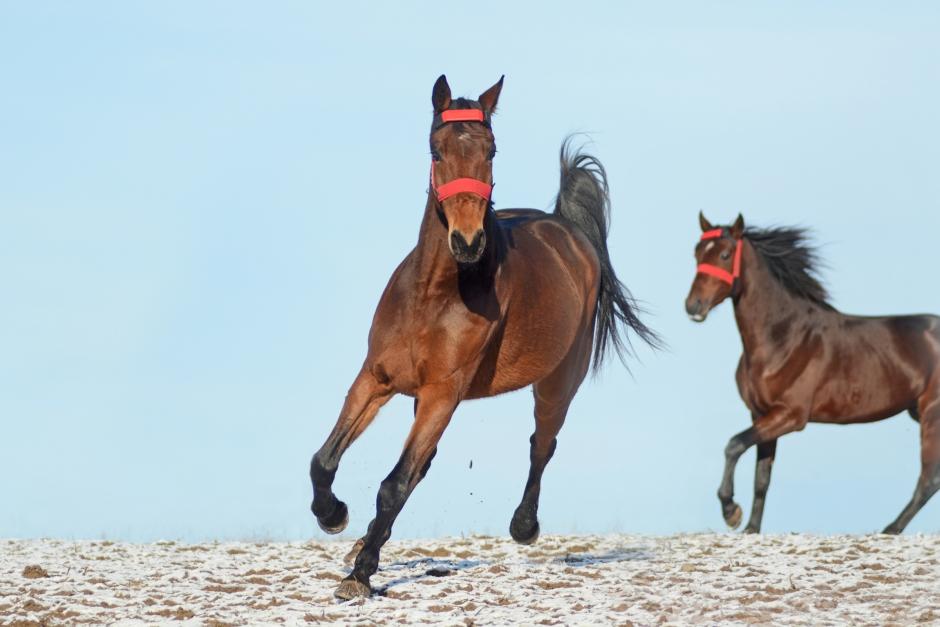 Horse tech är hett – men inget för lycksökare
