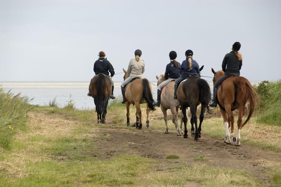 Turridning över länsgränsen gav förbud för hästverksamhet