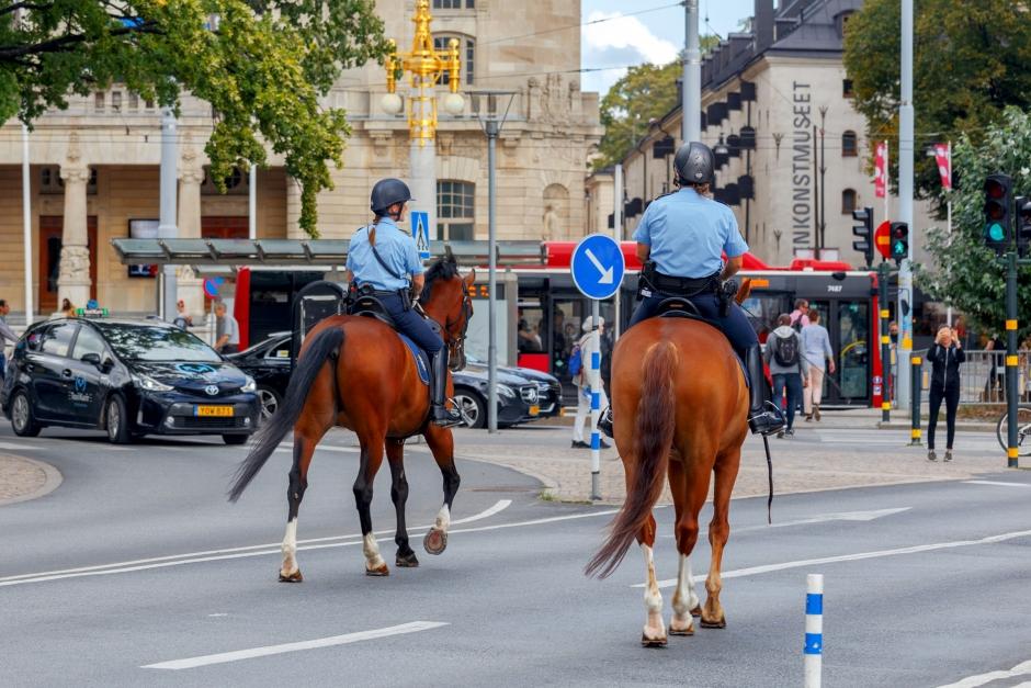Polisrytteriet söker SWB-hästar