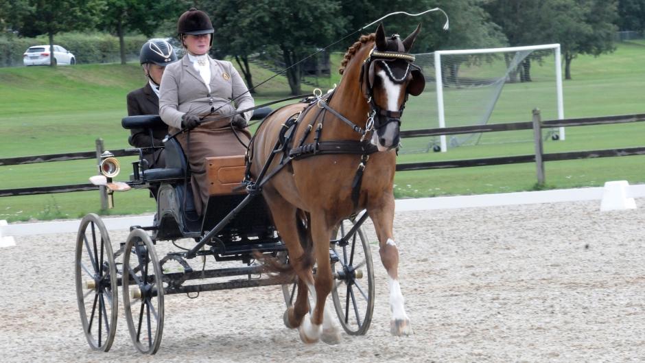 Norskt i topp på Malmö City Horsedriving