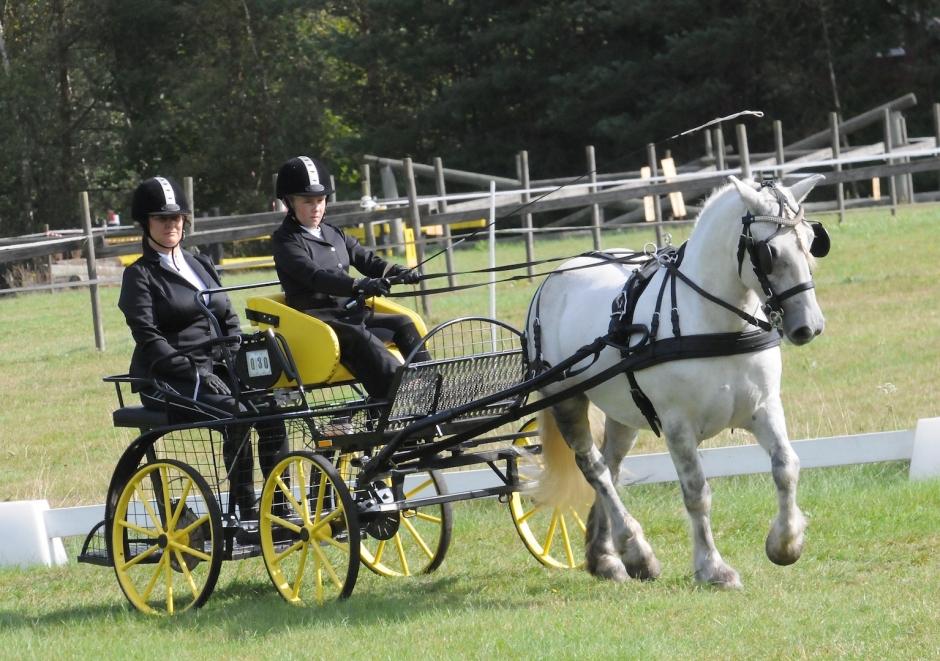 Nya hästar testades på körtävling i Mörrum