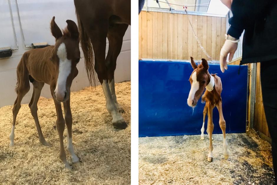 Miracle Man föddes efter mer än 14 månader