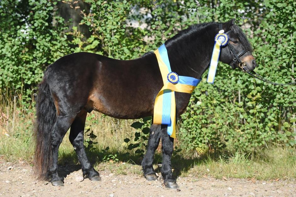Råås Figaro RD 19 är årets ponny