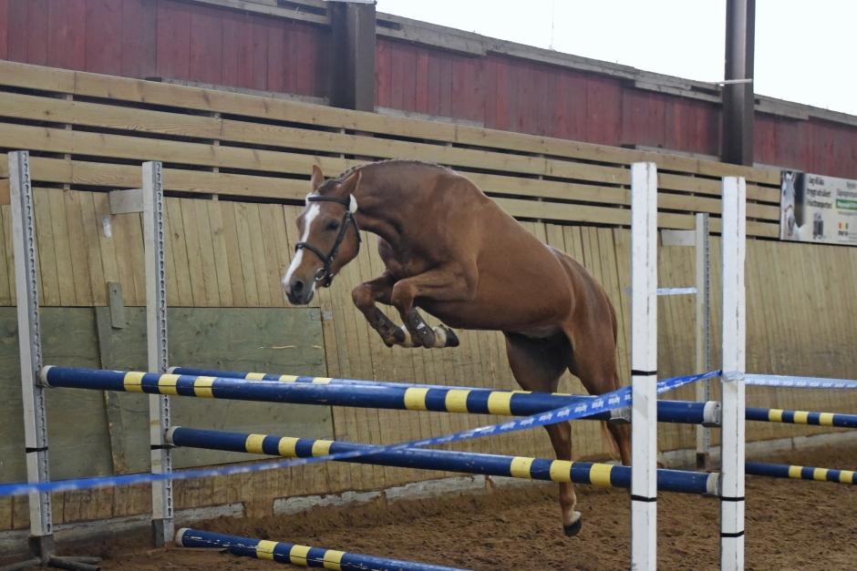 Ylva Hästak glänste i Nybro