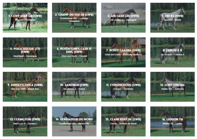 Hästarna till SSHS-auktionen på Elmia