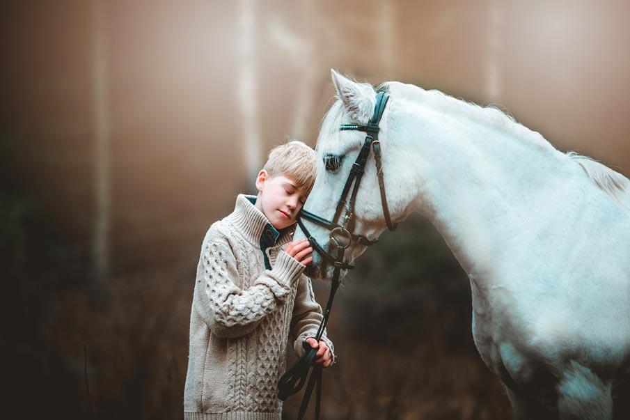 Ponnypappans blogg: Hästarnas helande kraft
