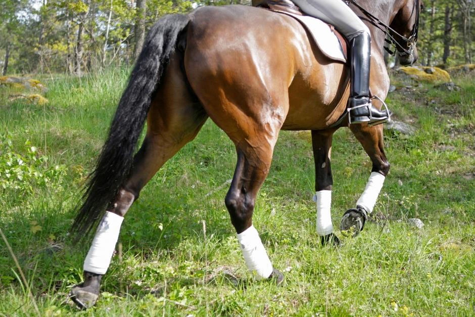 Skritta hästen frisk