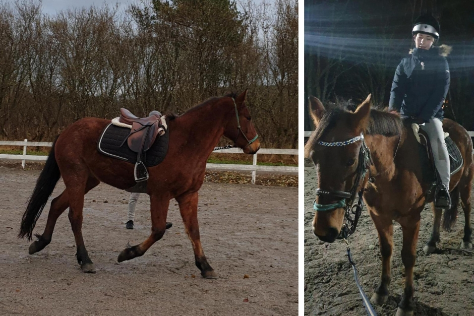 """Tindra om livrädda ponnyn: """"Vi är kompisar nu"""""""