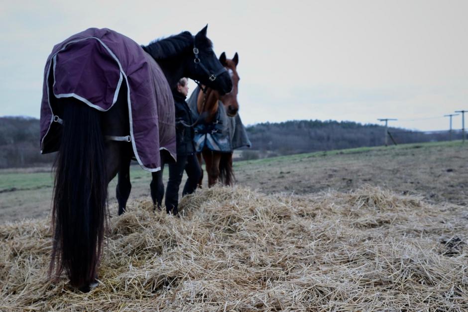Ekonomi: Vem ska ha råd med hästar i framtiden?